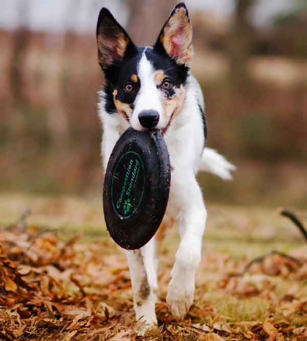 dogs learn best from experts